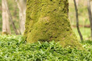 Baumstamm,Moos,Wald,gruen,Natur