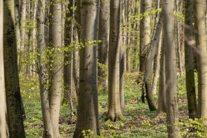 Wald,Baeume,Baum,Buchen,Baumstamm
