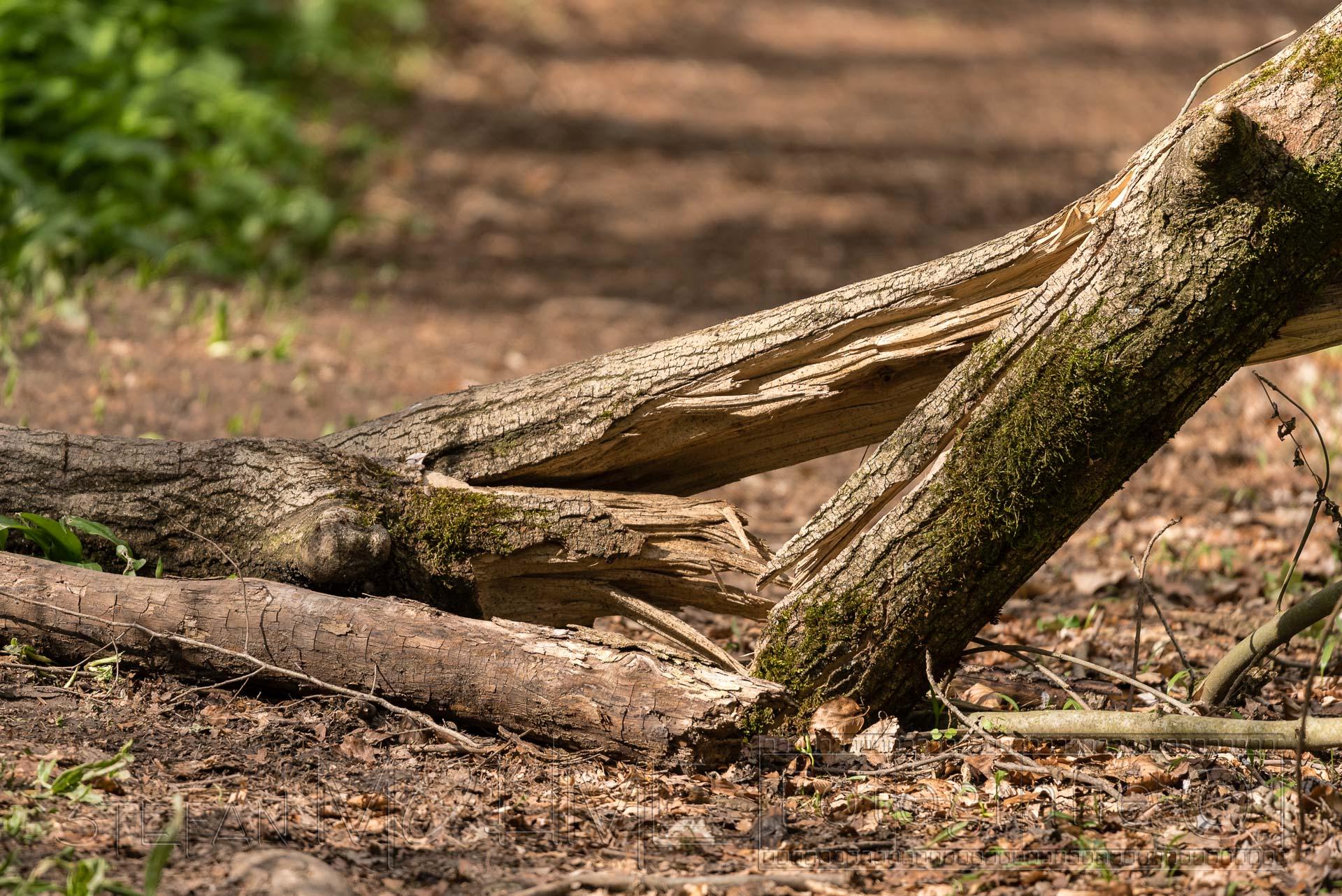 Holz,Stamm,Wald,Licht
