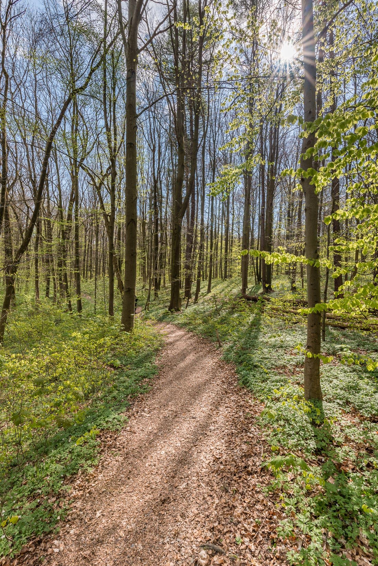 Wald,gegenlicht,natur,baumstaemme,laub