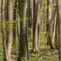 Wald,baeume,baum,natur