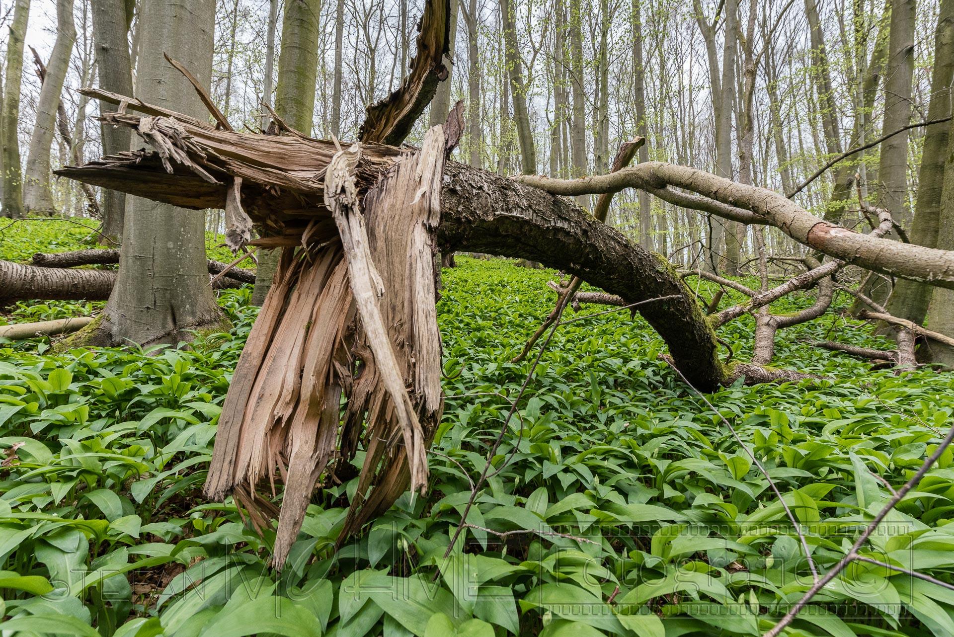 Baum,wald,kaputt,umgefallen,gebrochen