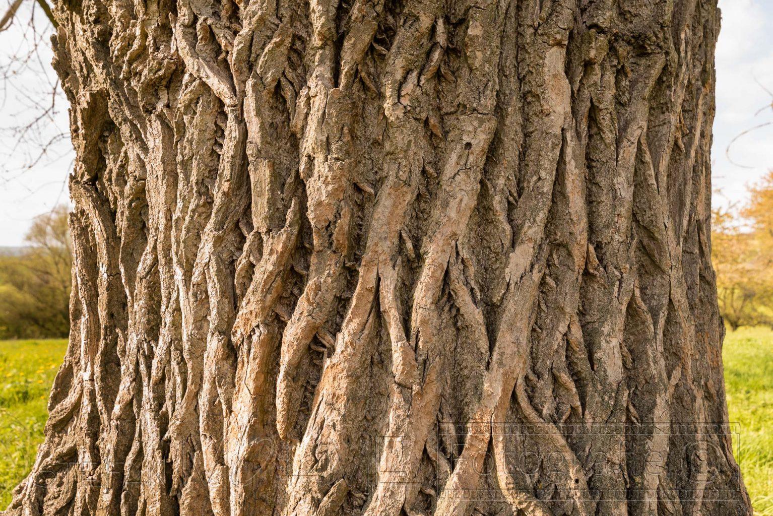 Baum, rinde,nahaufnahme,natur,details