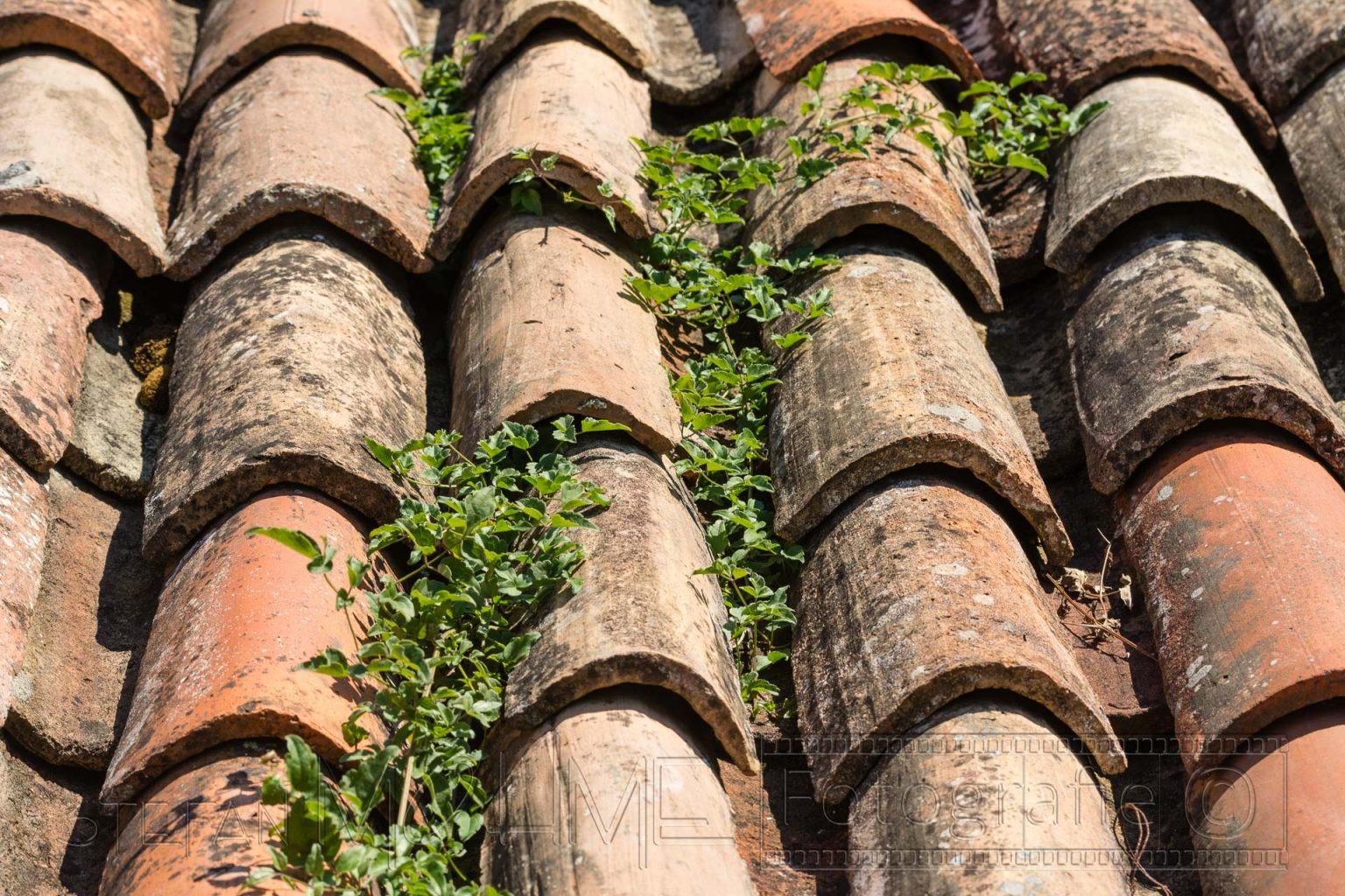 Dach,dachziegel,dachpfannen,unkraut,nahaufnahme,details,struktur