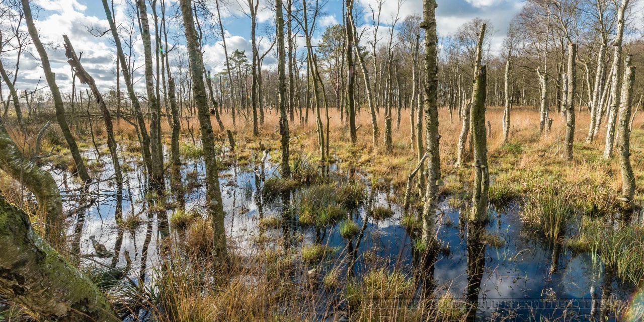 Moor ,dosenmoor,baueme,birken,natur,landschaft,herbst