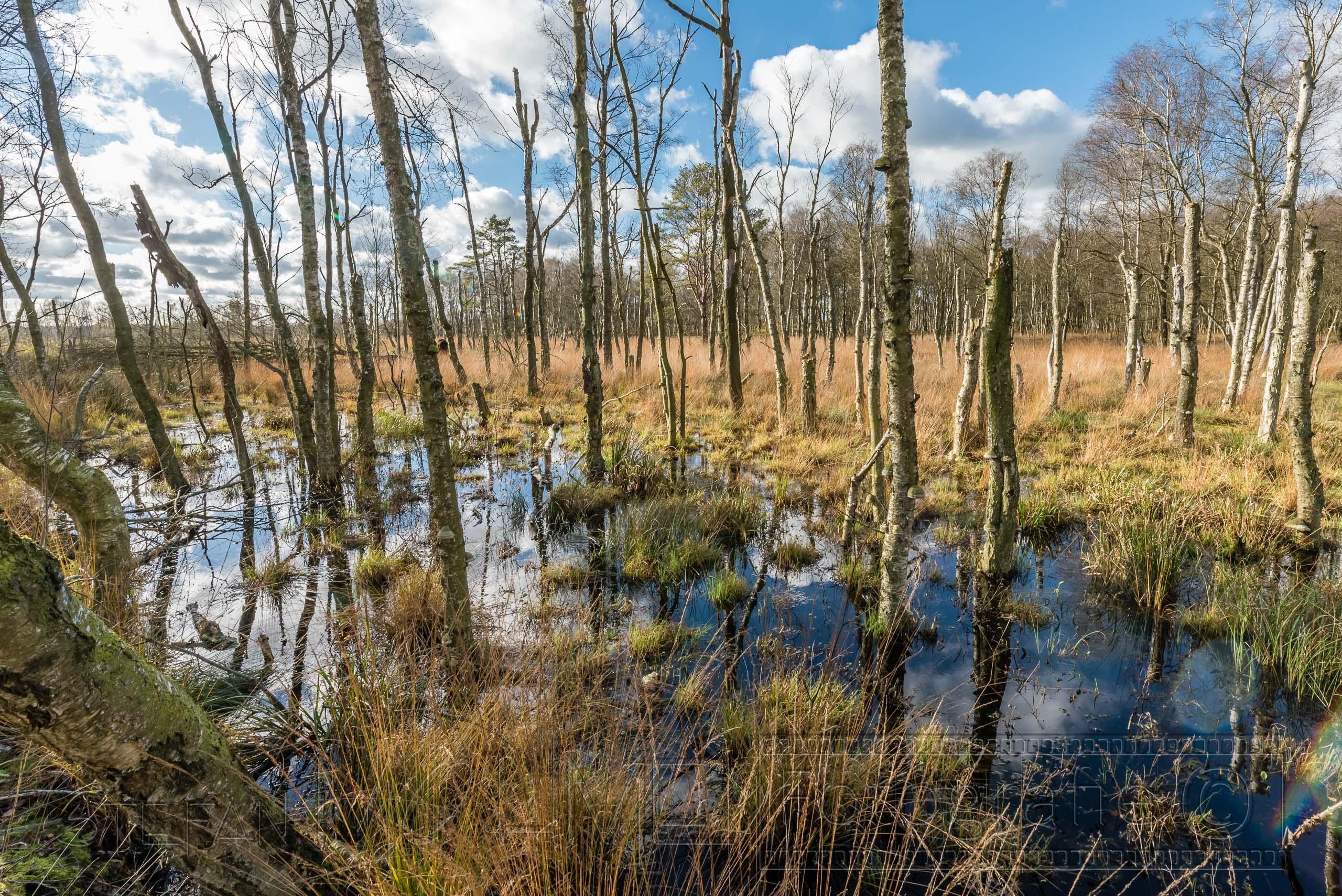 Naturschutzgebiet Dosenmoor in Schleswig Holstein.