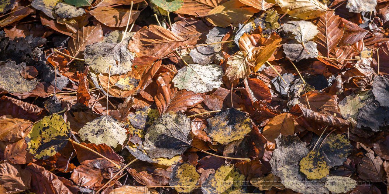 Herbst,laub,nahaufnahme,details,farbe