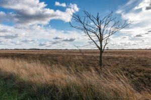 Baum,moor,dosenmoor,landschaft,natur