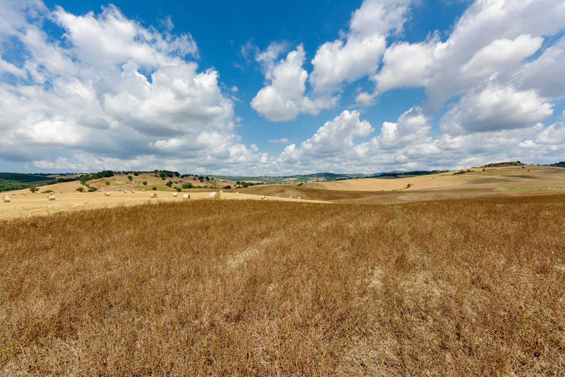 Toskana,sommer,feld,getreide,ernte,maremma,landschaft