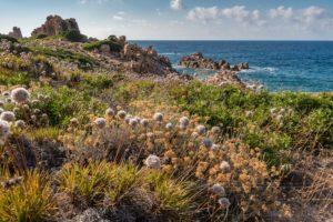sardinien,kueste,meer,natur,landschaft,felsen,blumen,bluete