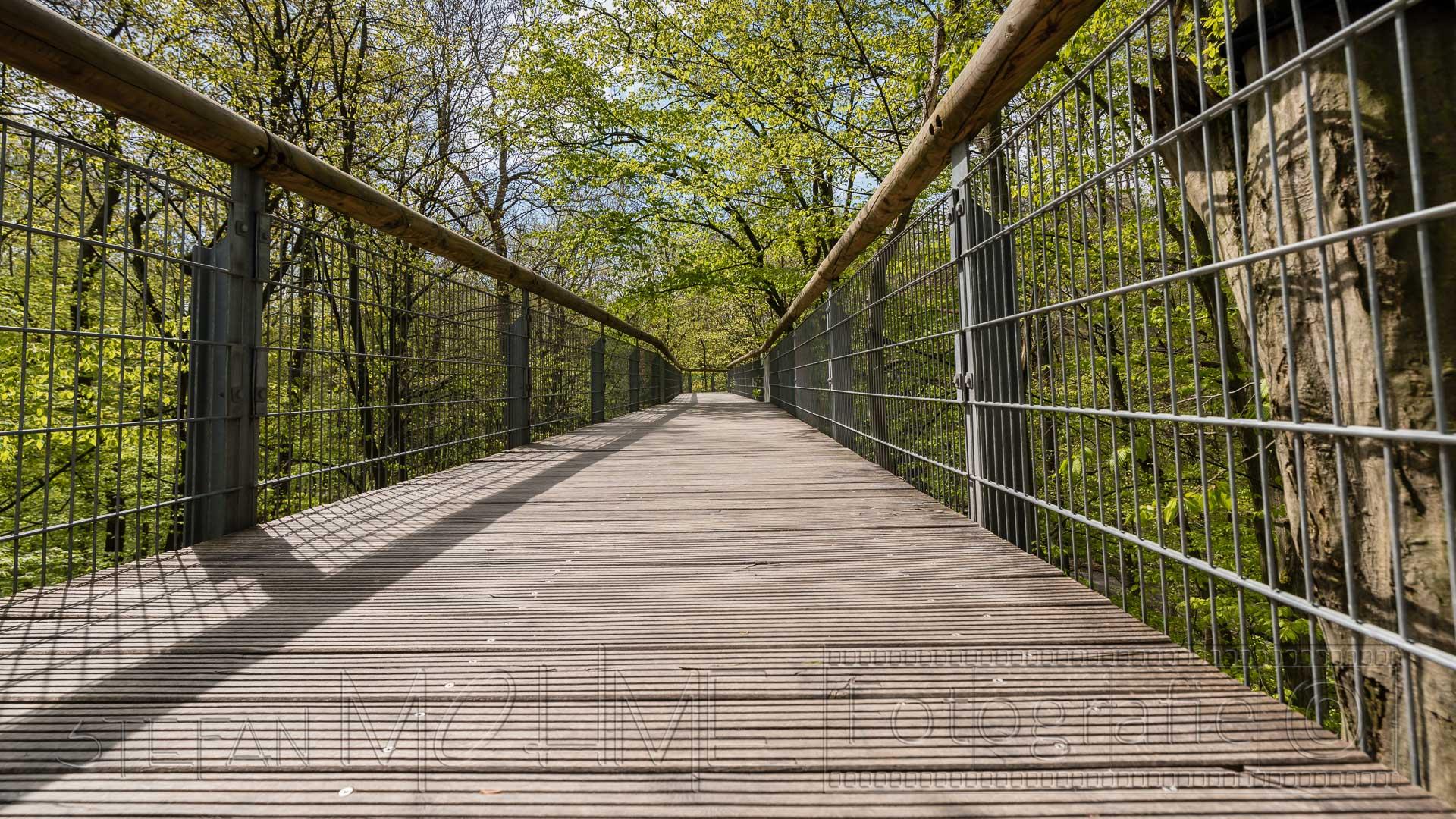 Nationalpark Hainich, Fotospaziergang Baumkronenpfad.