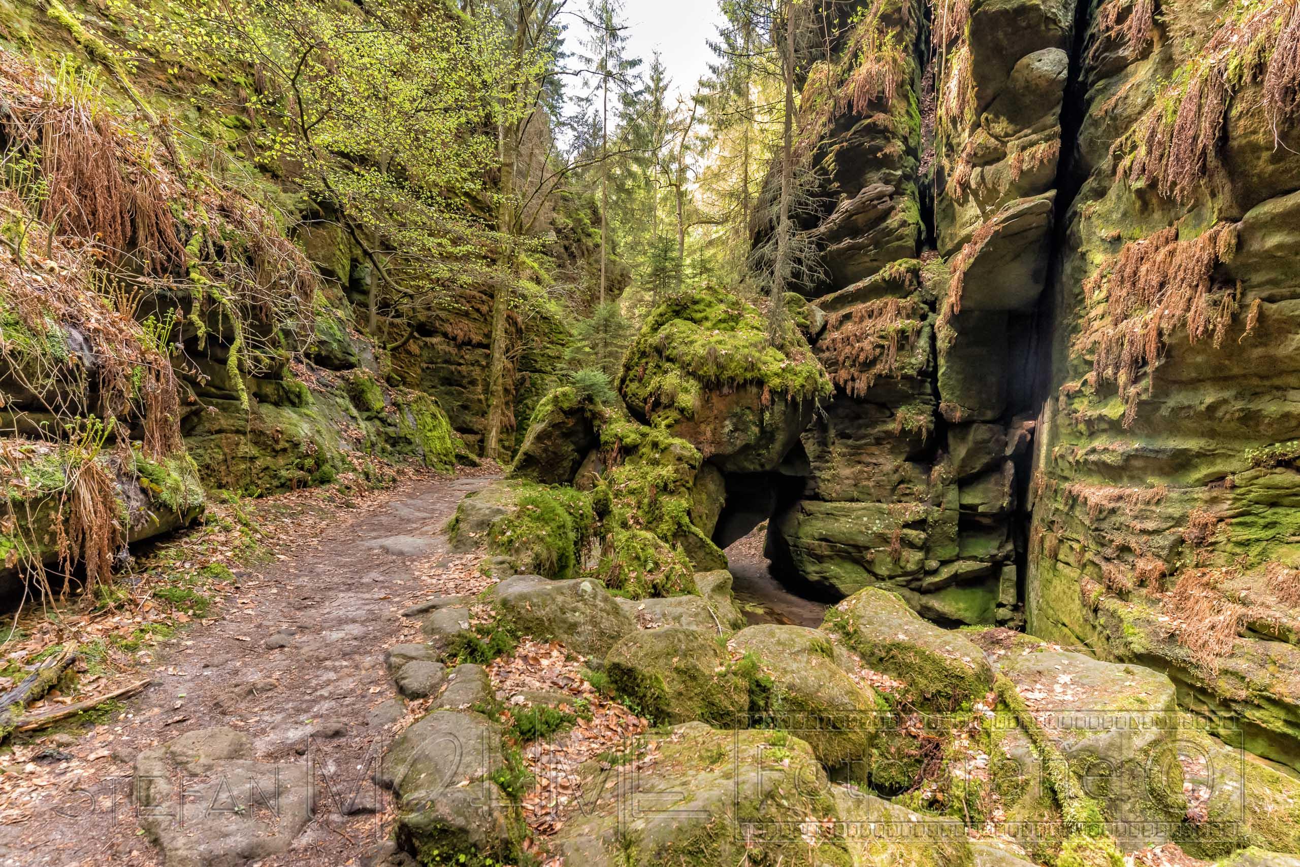 felsen,natur,moos,farn elbsandsteingebirge