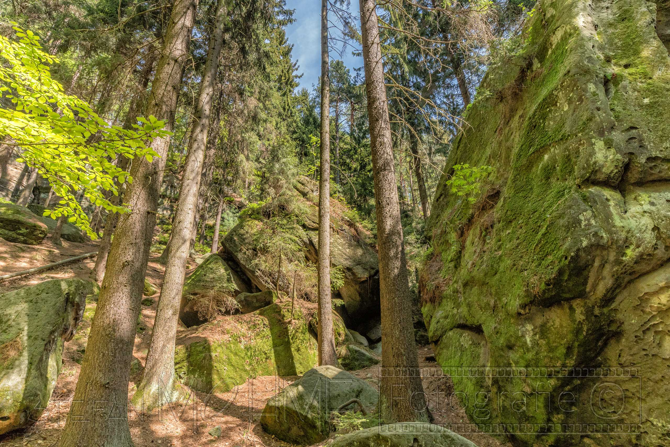 landschaft,natur,steine,felsen,moos,baeume,wald,elbsandsteingebirge