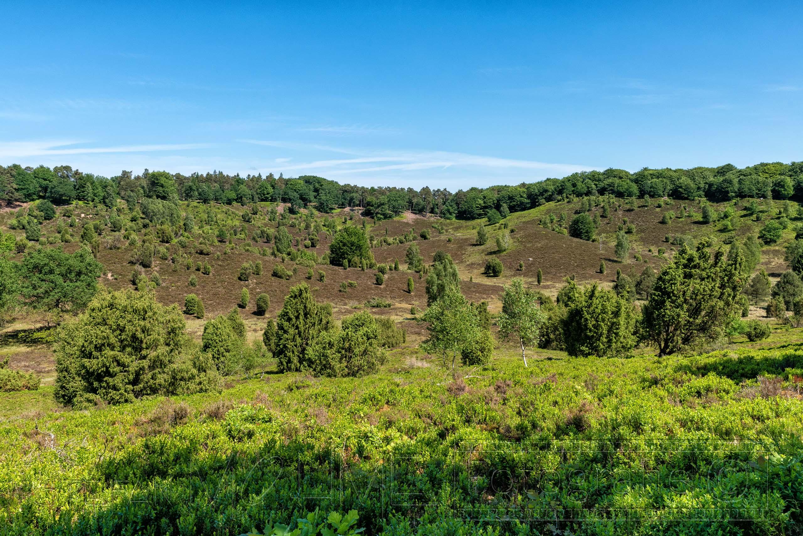 Rundwanderung Lüneburger Heide, Bolterberg & Totengrund.