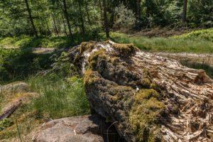 landschaft,lueneburger heide,wiese,totholz,details