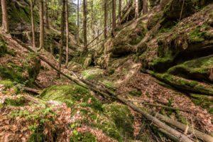 wald,baeume,moos,landschaft,natur,saechsische schweiz