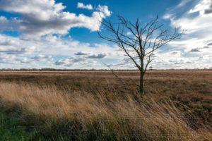 wolken,landschaft,natur,moor
