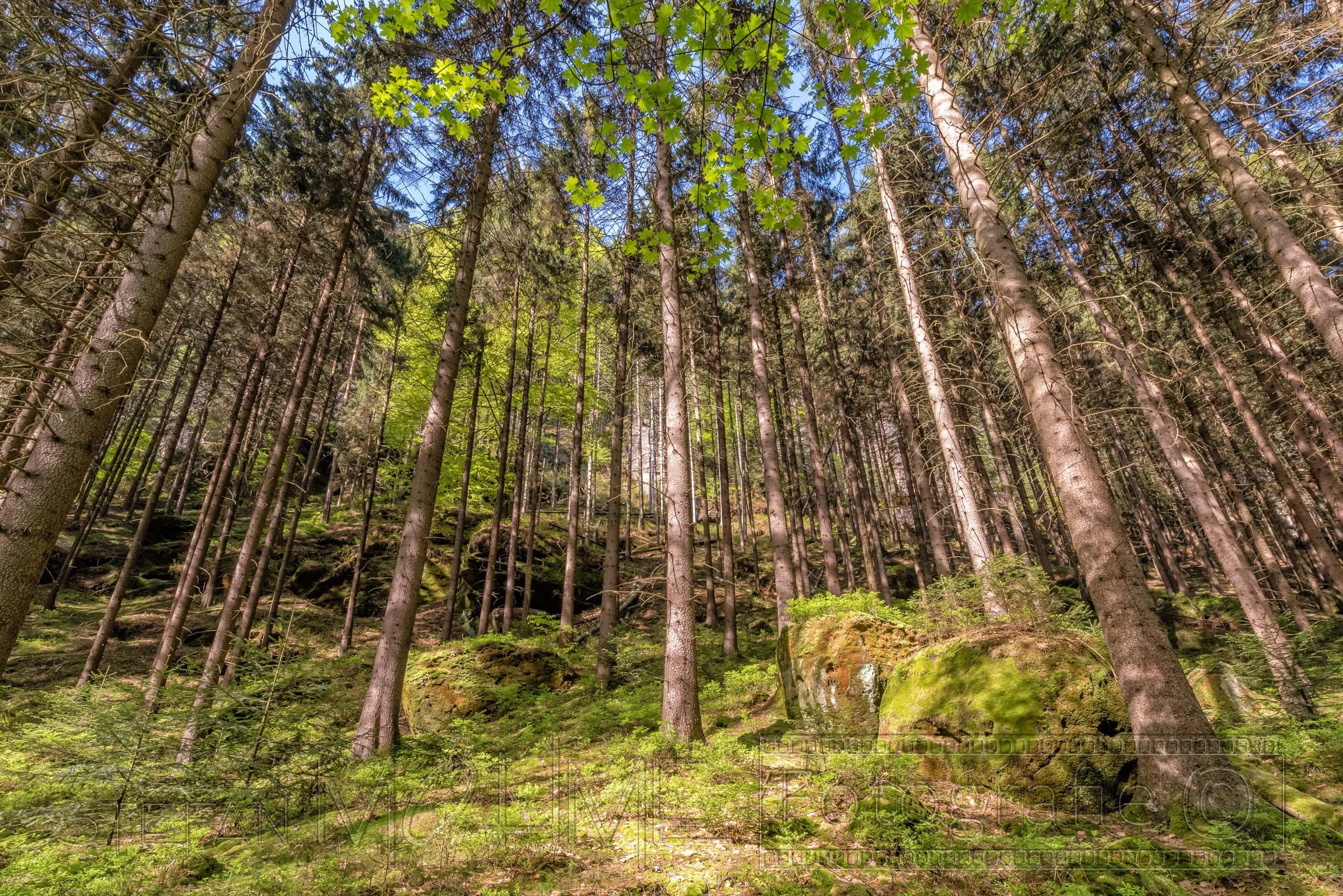 saechsische schweiz,polenztal,landschaft,natur,baeume,elbsandsteingebirge