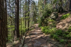 saechsische schweiz,polenztal,landschaft,natur,baeume,weg,elbsandsteingebirge