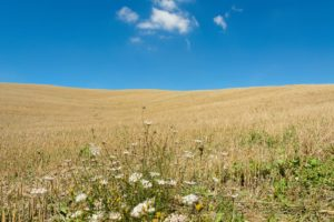 feld,getreide,landschaft,toskana,himmel,blau