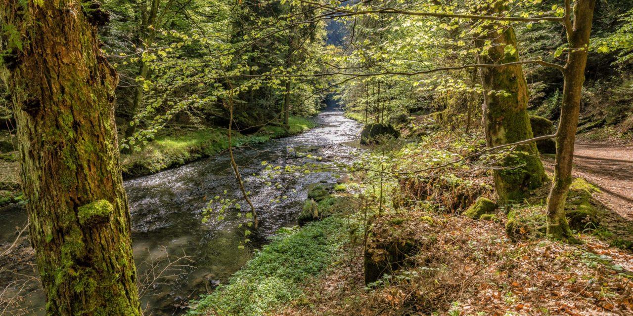 saechsische schweiz,polenztal,fluß,landschaft,natur,baeume,weg,elbsandsteingebirge