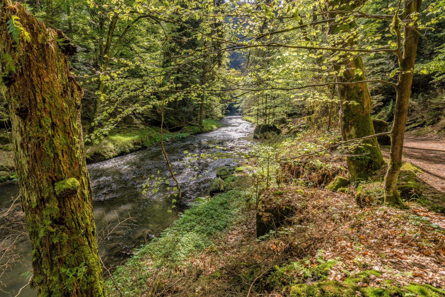 Elbsandsteingebirge, Rundwanderung Polenztal und Bastei.