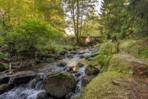 harz,bach,bruecke,natur,landschaft