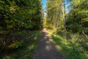 harz,wanderweg,wald,bäume
