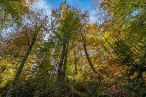 wald,bäume,herbst,natur