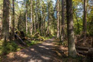 harz,wanderweg,wald,bäume,natur,landschaft