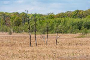 moor,wiese,totholz,müritz nationalpark,natur,landschaft