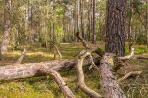 natur,landschaft,totholz,wald,baeume