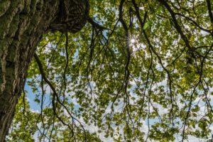 sonne,natur,gegenlicht,landschaft,baeume