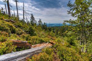 Bayrischer Wald landschaft