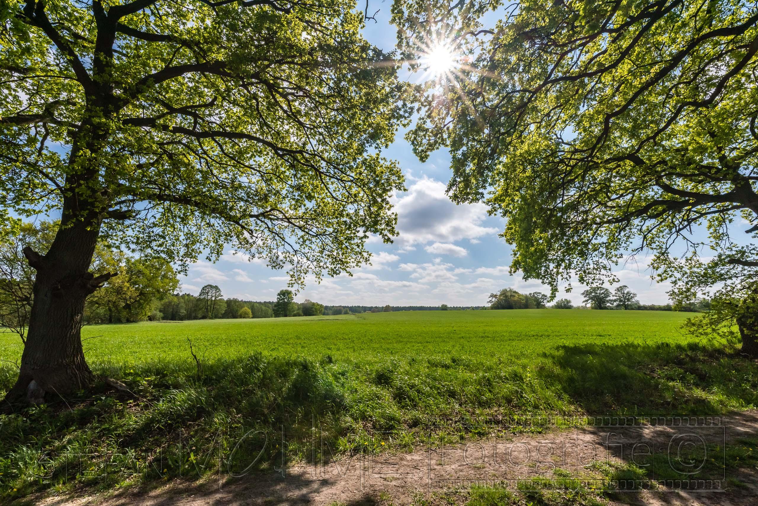 Landschaft Mecklenburg Vorpommern