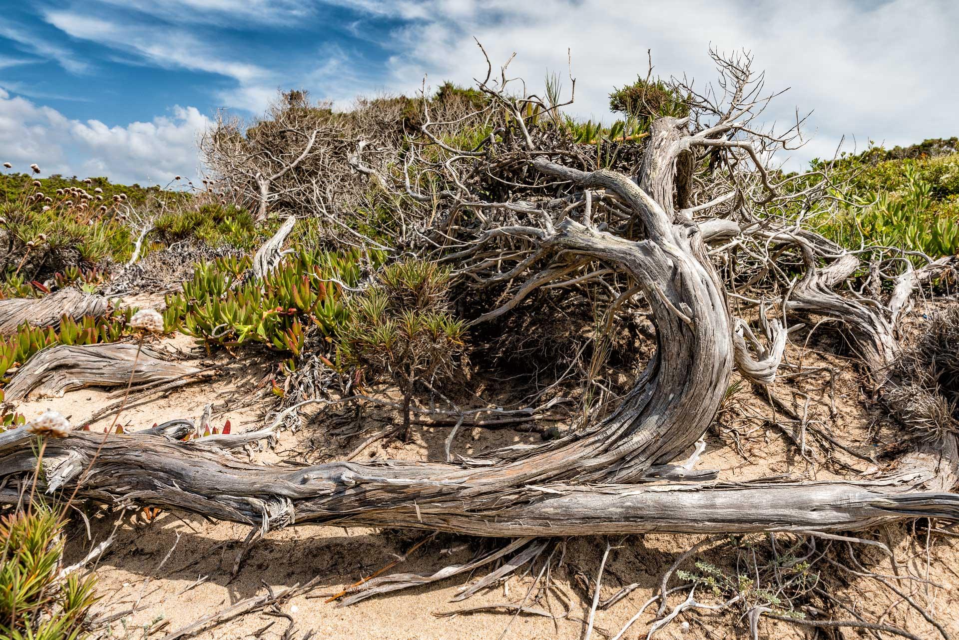 Natur an der Sardischen Kueste