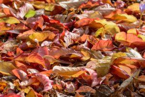 Herbstlaub in nahaufnahme