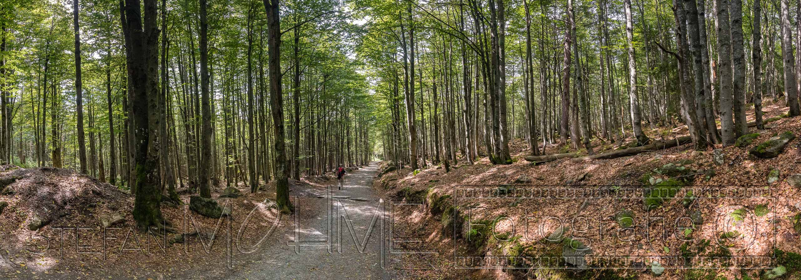 Panorama Landschaft Bayrischer Wald