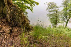 Rügen Nationalpark Jasmund