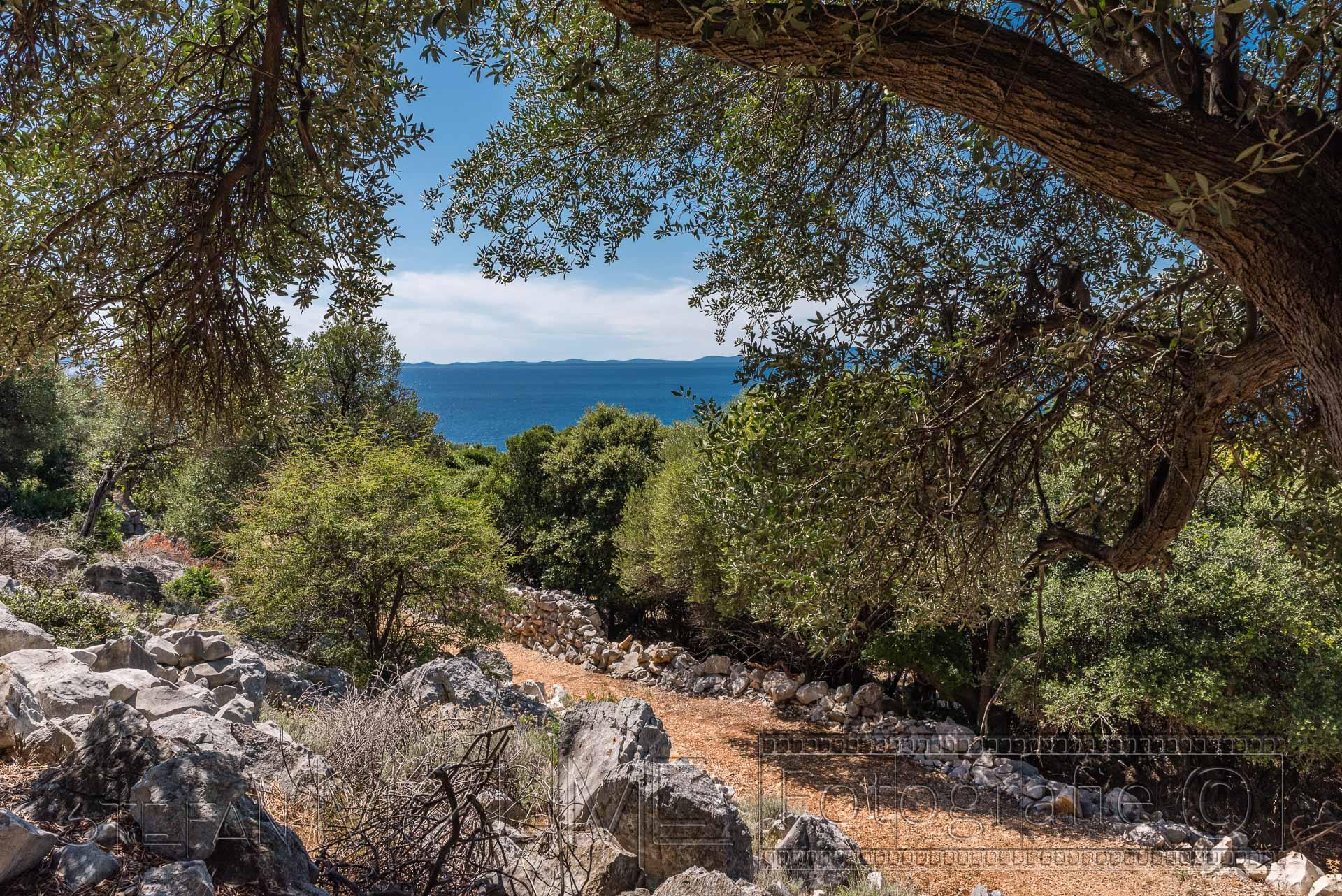 Kroatien Pag Lun Olivenbäume Landschaft