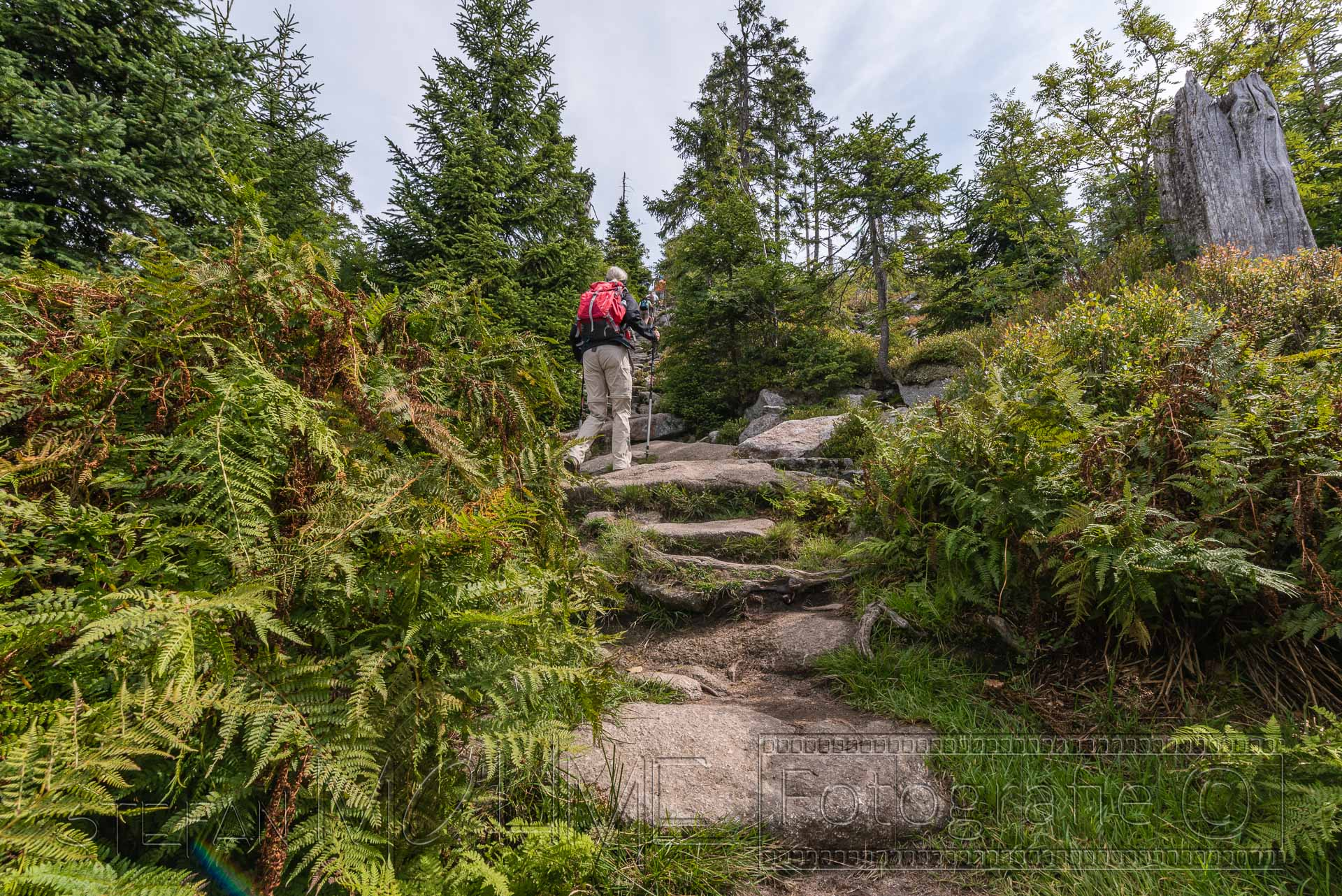 Bayrischer Wald Landschaft um den Lusen