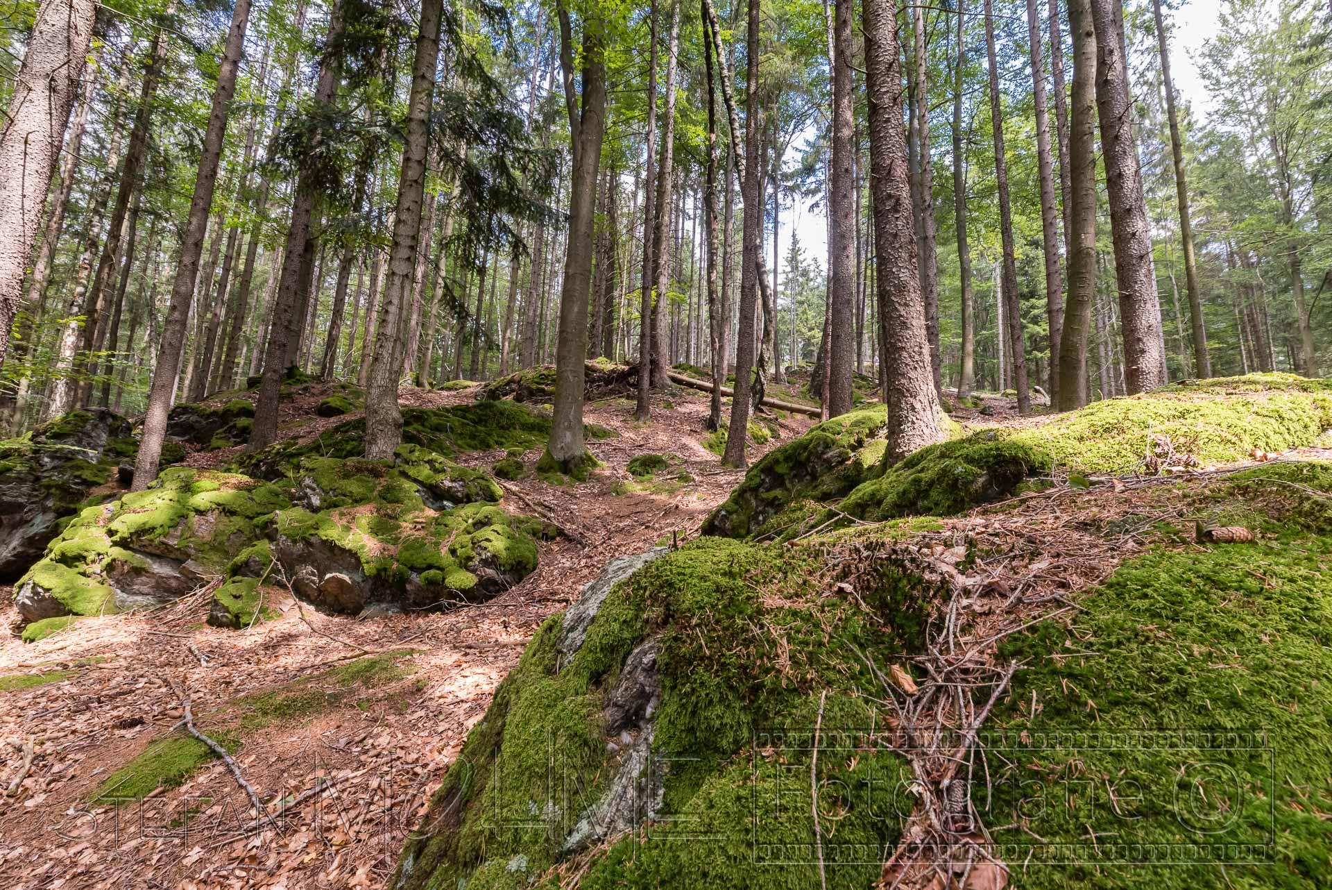 Bayrischer Wald Landschaft Steinklamm