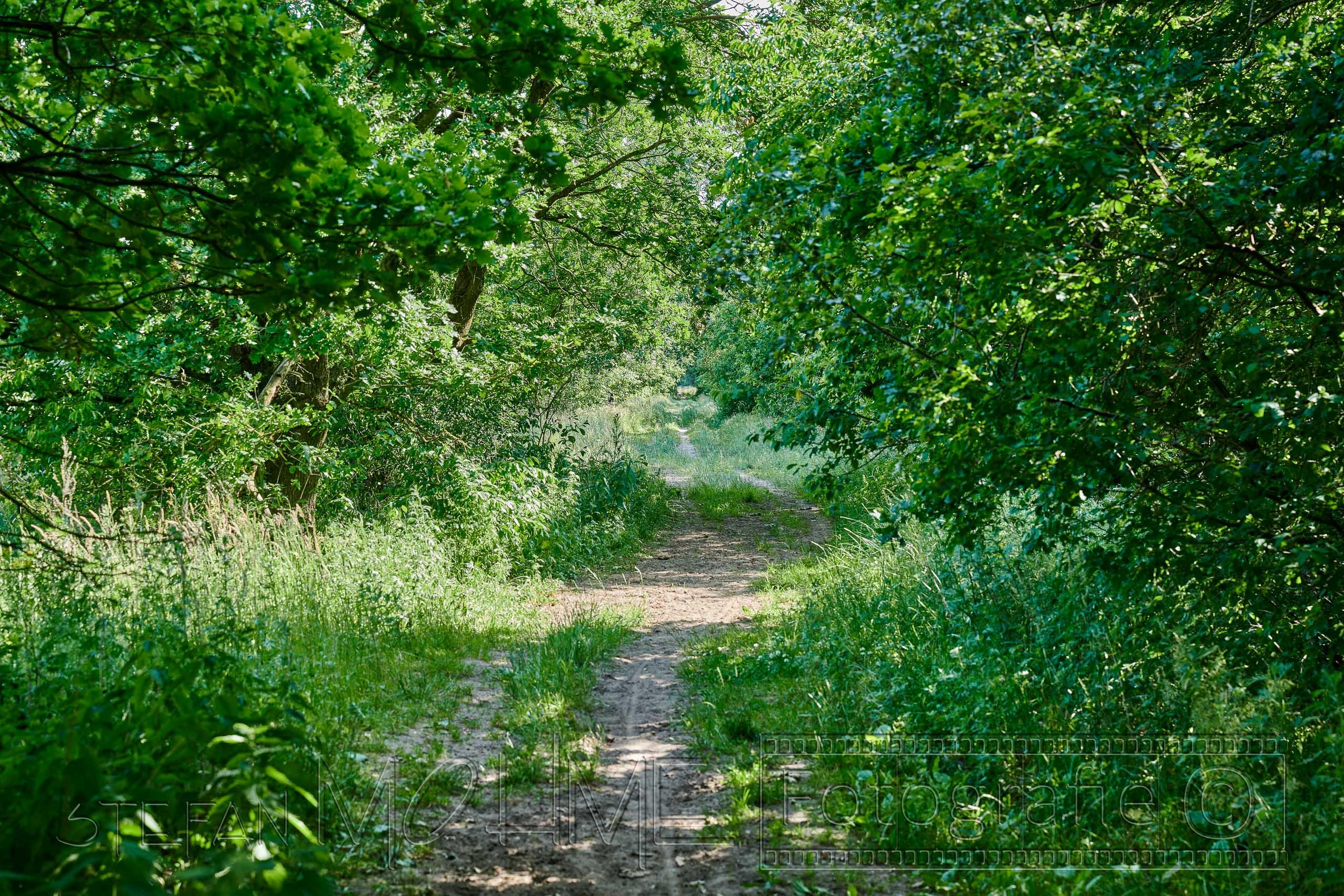 Heidmoor Natur Landschaft Schleswig Holstein