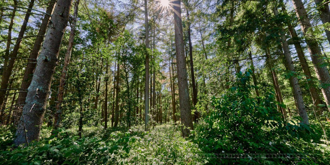 Heidmoor, Schleswig Holstein, ein Fotospaziergang.