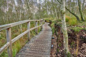 Himmelmoor, Quickborn, Schleswig Holstein ,Natur, Landschaft
