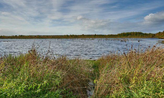 Himmelmoor, Schleswig Holstein, ein Fotospaziergang.