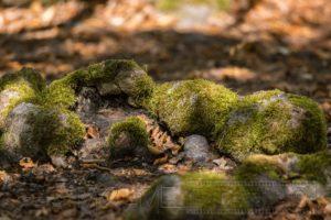 Hutewald,Halloh,Natur,Landschaft,Baeume