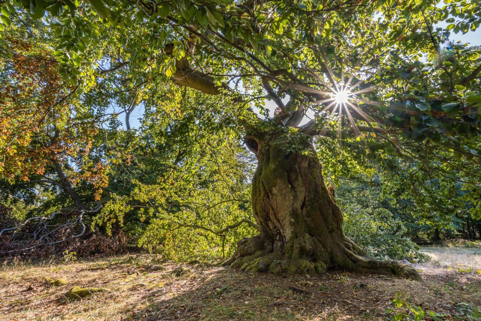 Nationalpark, Kellerwald ,Edersee, Natur , Landschaft,Resumee 2020