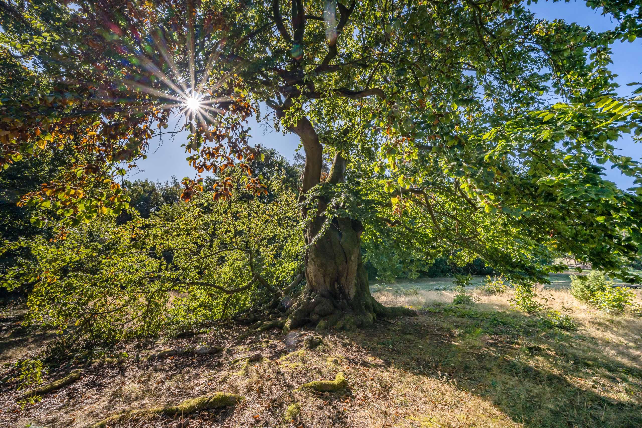 Nationalpark,Kellerwald,Edersee,Landschaft,Natur,Hessen
