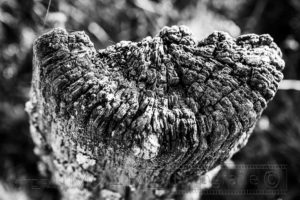 Holzpfahl , Nahaufnahme, schwarzweiss